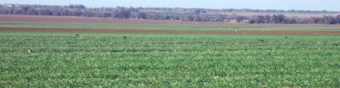 fields1banner