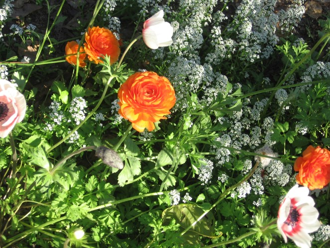 Flowers on the path, Nir-Oz
