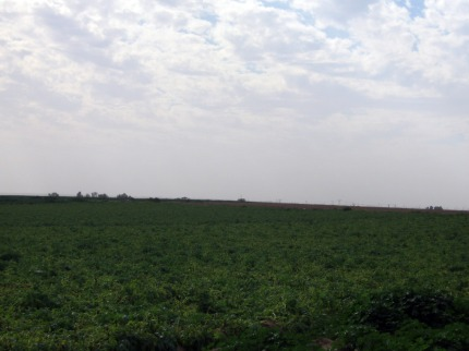 Fields of Nir-Oz, looking towards Aza
