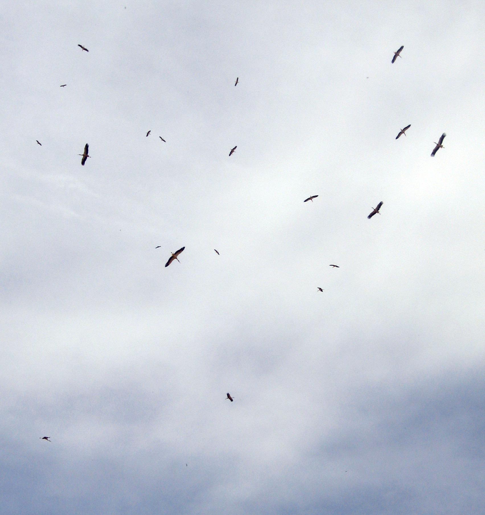 storks take off